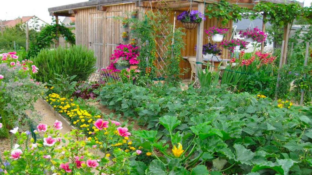 Jardiner en ville. des fleurs et des légumes dans les parcelles.
