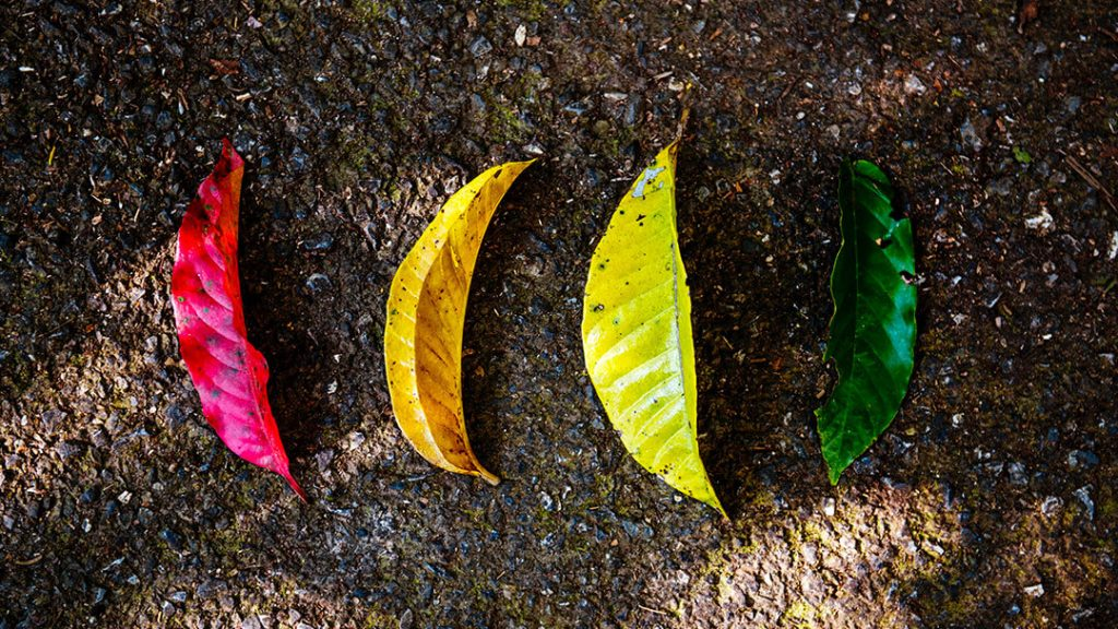 Feuilles d'arbres colorées
