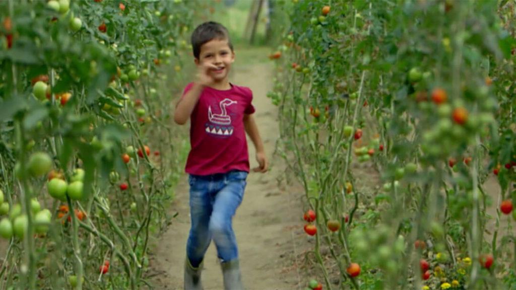 Au milieu des tomates